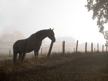 Horse in a misty morning pasture Stock Photos