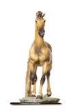 Horse model Stock Image