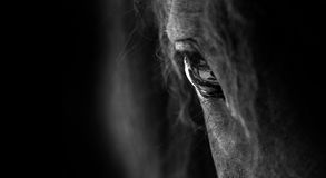 Horse. Monochrome closeup of a Horse Eye - horizontal view Stock Image