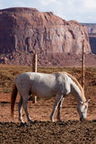 Horse at Monument Valley Royalty Free Stock Image