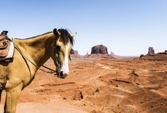 Horse at Monument Valley Royalty Free Stock Images