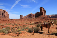 Horse at Monument Valley Stock Images