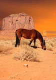 Horse Monument Valley Royalty Free Stock Image