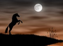 Horse in the moonlight. Wild horse silhouette in the moonlight landscape Royalty Free Stock Images
