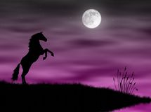 Horse in the moonlight. Wild horse silhouette in a pink moonlight Royalty Free Stock Image