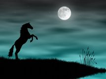 Horse in the moonlight. Wild horse silhouette in a blue moonlight Royalty Free Stock Image