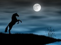 Horse in the moonlight. Wild horse silhouette in a blue moonlight Royalty Free Stock Images