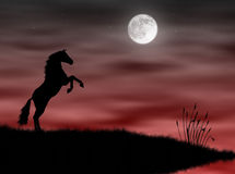 Horse in the moonlight. Wild horse silhouette in the moonlight landscape Stock Images