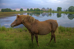 Horse in a moor Royalty Free Stock Images