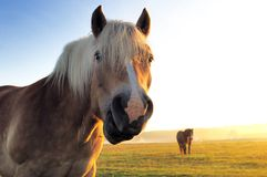 Horse and morning Royalty Free Stock Photos