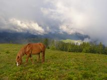 Horse in the morning in mountains Stock Photos