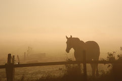 Horse in morning sunrise royalty free stock photo