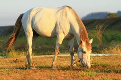Horse with morning sunshine. In the field stock photos