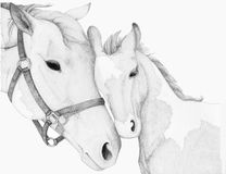 Horse Mother Foal Drawing Stock Photo
