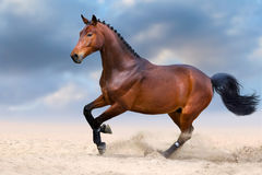 Horse in motion. Bay horse in motion in desert dust against sky Stock Images