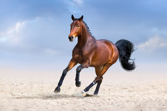 Horse in motion. Bay horse in motion in desert dust against sky Stock Photos