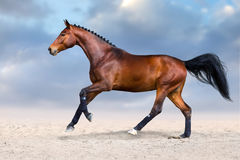 Horse in motion. Bay horse in motion in desert dust against sky Stock Photo