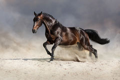 Horse in motion. Bay horse in motion in desert dust against sky Royalty Free Stock Photo