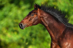 Horse in motion royalty free stock image