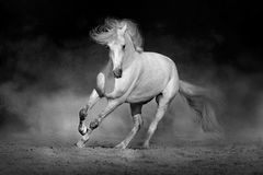 Horse in motion in desert. Against dramatic dark background. Black and white picture Royalty Free Stock Photos