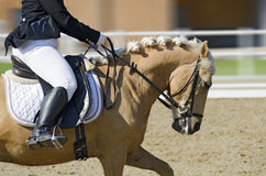 Horse in motion on a dressage area. Rider on a horse in motion on a dressage area Stock Images