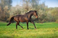 Horse in motion. In autumn landscape royalty free stock photos