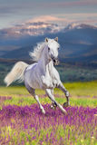 Horse in motion stock image