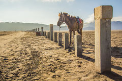 A Horse at Mount Bromo in east Java, Indonesia Royalty Free Stock Photography
