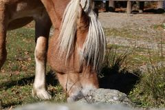 Horse. In mountain Royalty Free Stock Photography