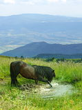 Horse in the mountain royalty free stock photos