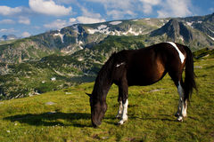 Horse in mountain Stock Photos
