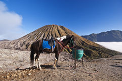 Horse with mountain as a backdrop. A saddled horse in the volcano crater of the Bromo Tengger Semeru National Park on the island Java in Indonesia royalty free stock images
