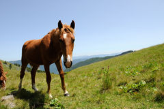 Horse in mountain Royalty Free Stock Image