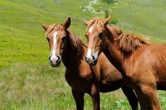 Horse in mountain Royalty Free Stock Photos