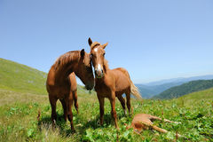 Horse in mountain Stock Photo