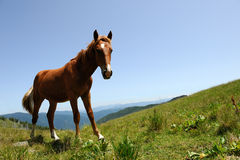 Horse in mountain Stock Photography