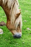 Horse on the mountain Stock Photography