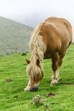 Horse on the mountain Stock Photo