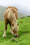 Horse on the mountain Stock Image