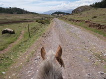 Horse on mountain dirt road Royalty Free Stock Image