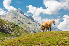 Horse in the Mountain Royalty Free Stock Photography