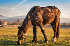 Horse on mountain. Horse grazing in the pasture Royalty Free Stock Images