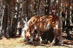 Horse. In mountain Stock Photography
