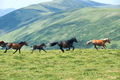 Horse in mountain Stock Photos