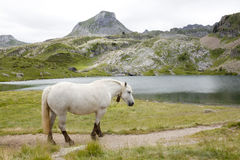 Horse in the mountain near a lake in Ayous Lakes Stock Photo
