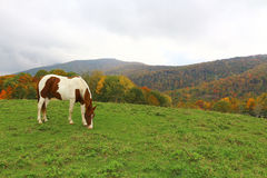 Horse on the Mountain Royalty Free Stock Images