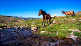 Horse on mountain pasture Royalty Free Stock Photography