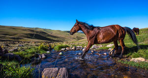 Horse on mountain pasture Stock Photos