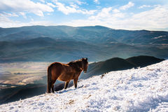 Horse on mountain. Horse on mountain pasture. Blue sky Stock Photo