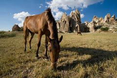 Horse on the mountain pasture in Cappadocia Stock Image